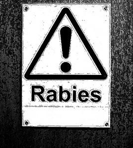rabies-ft
