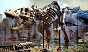 Tyrannosaurus Rex fot. Wikipedia