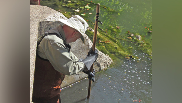 Prof. Jim Macdonald czyści lagunę w Gompers Park fot. Krystyna Cygielska