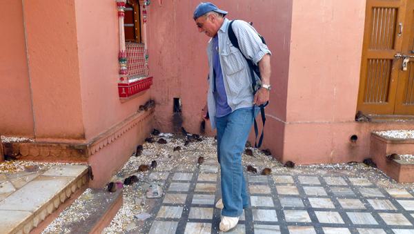 Marek w świątyni (dobrze wypasionych) szczurów