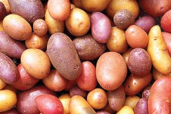 Poland finds potential in potato power