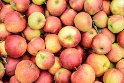 Polish apples waiting for Kaliningrad kids
