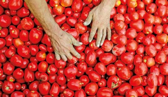 ZDROWIE. Jedzmy pomidory. Hatha joga dla seniorów. Dla poprawy nastroju