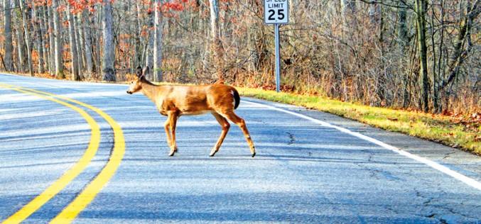 W Illinois zderzenia z jeleniami na porządku dziennym