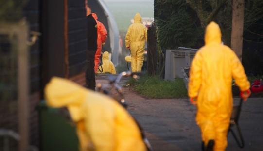Niemcy. Pierwszy potwierdzony przypadek ptasiej grypy u dzikiego ptaka