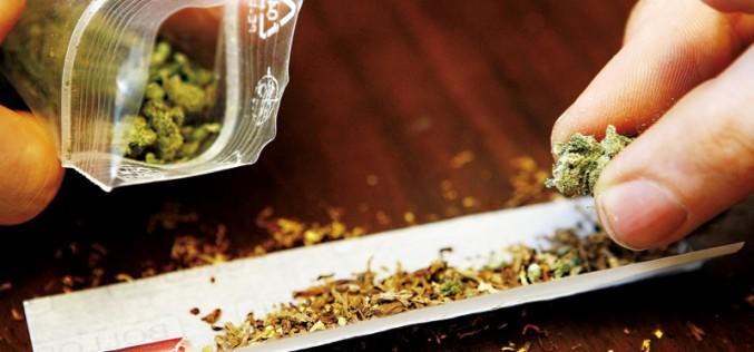 2,5 tys. wnioskodawców chce kupować marihuanę