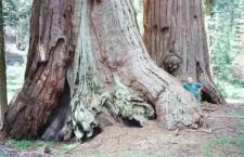 3g Sequoia NP VI 2002