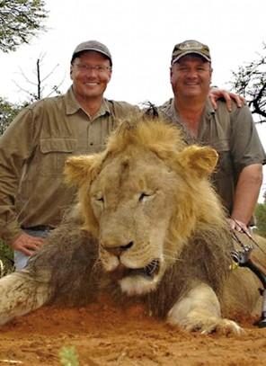 Zginął słynny lew. Nagonka na myśliwego z USA