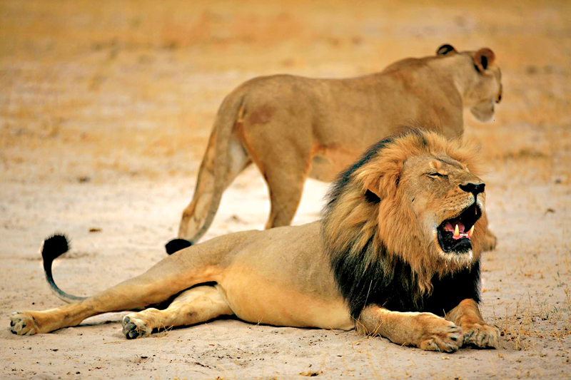 Lew Cecil fot.Zimbabwe Parks and Wildlife Management Authority/EPA