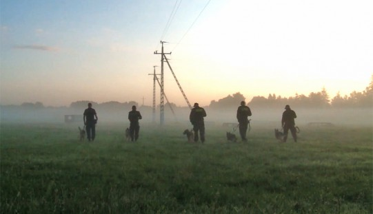 Czworonożni funkcjonariusze, czyli jak szkolone są psy policyjne