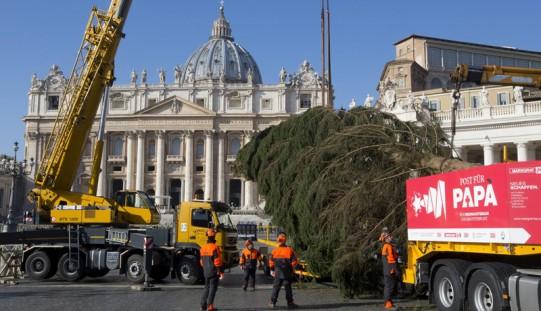 Watykan. Na placu Świętego Piotra stoi już świąteczna choinka (ZDJĘCIA)