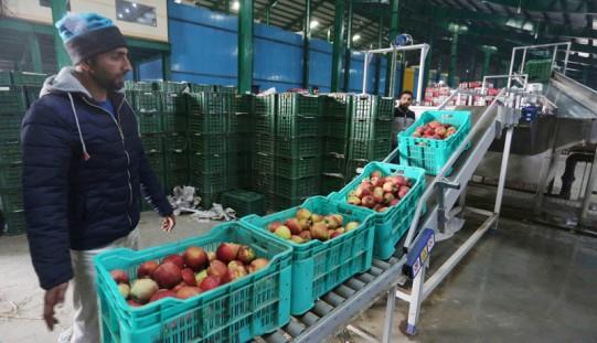 USA nie ulżą producentom nabiału, ale dają nadzieję producentom jabłek