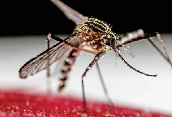 Zika – nowy wróg ludzkości