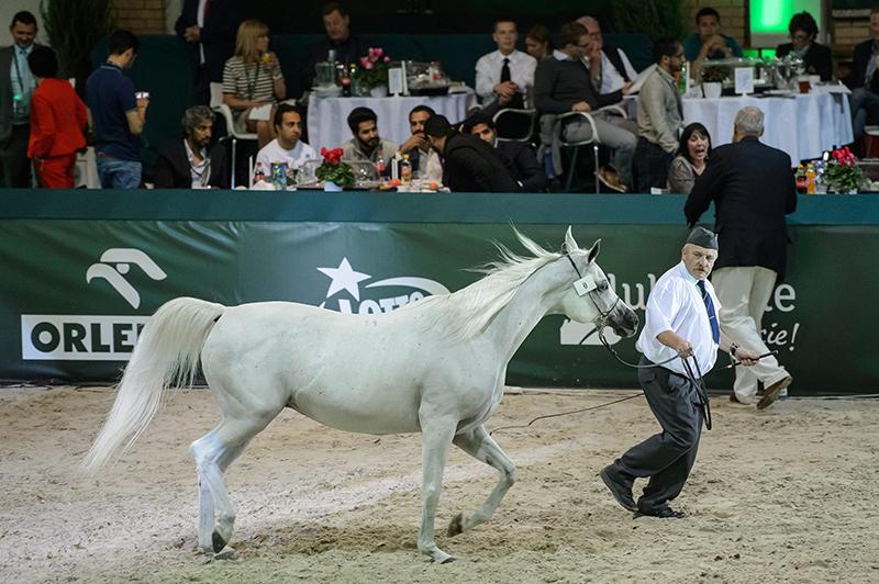 Klasz Emira, którą podczas aukcji w Janowie Podlaskim zlicytowano podwójnie fot.Wojciech Pacewicz/EPA