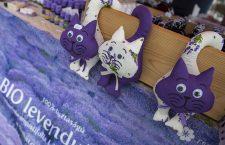 13th Tihany Lavender Festival, Hungary - 23 Jun 2017