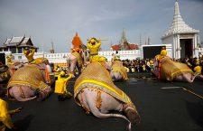 Thai elephants parade to honor King Rama X's coronation ceremony, Bangkok, Thailand - 07 May 2019